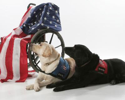 Service Dogs For Disabled Veterans Florida