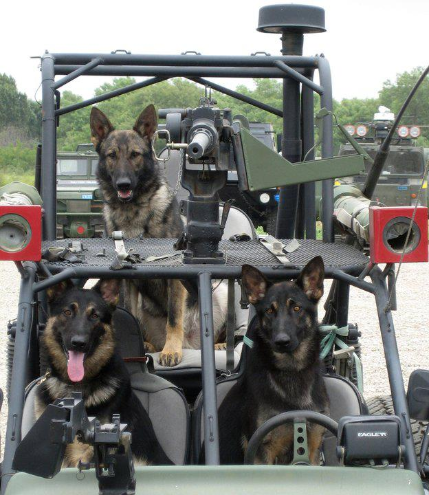 Military K9 Harness besides Funny Soldier Military Pictures Us besides Working Dog Harness furthermore Military Dogs 2 together with Who Shot Osama Bin Laden Identity US Navy SEAL Kept Secret Forever. on tactical k9 harness for dogs