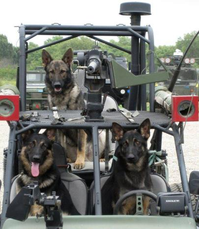 Three military working dogs ready for action.From Kevin Hanrahan's Military Working Dogs best photos of the year.