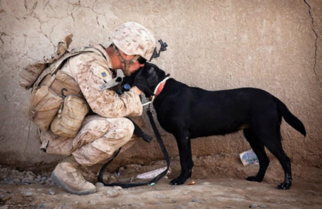 A Marine kissing his military working dog. Photo courtesy of Kevin Hanrahan.