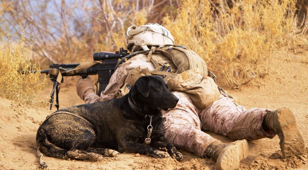 Army Sniffer Dog Breeds