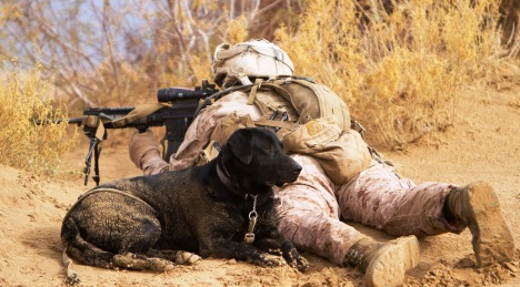 U.S. Marine Lance Cpl. Brandon Mann, a dog handler with Alpha Company, 1st Light Armored Reconnaissance Battalion, and native of Arlington, Texas, sights in with his infantry automatic rifle while providing security with Ty, an improvised explosive device detection dog, during a patrol here, Feb. 16. Marines and sailors with 1st LAR and India Company, 3rd Battalion, 3rd Marine Regiment, conducted clearing and disrupting operations in and around the villages of Sre Kala and Paygel during Operation Highland Thunder. Marines with 1st LAR led the operation on foot, sweeping for enemy weapons and drug caches through 324 square kilometers of rough, previously unoccupied desert and marshland terrain. Mobile units with1st LAR set up blocking positions and vehicle check points while India Company, 3/3 conducted helicopter inserts to disrupt insurgent freedom of movement.