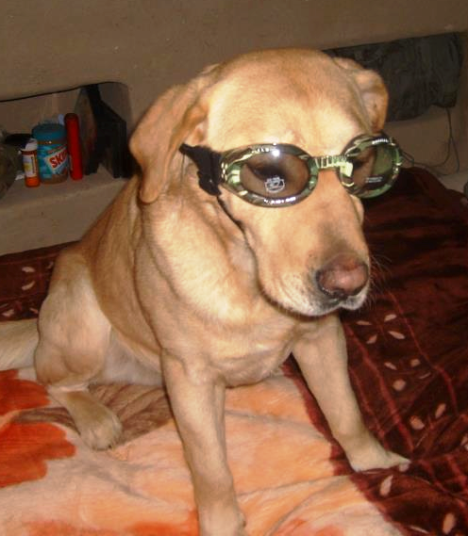 "Honza sporting a pair of ""doggles."""