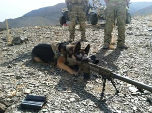 "Military Working Dog Bak as a ""sniper"""
