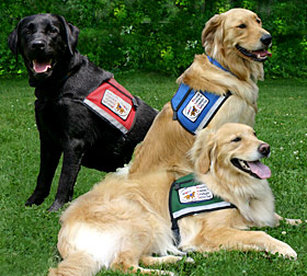 An example of service dogs in training. Photo courtesy: Hill County Disabled Group