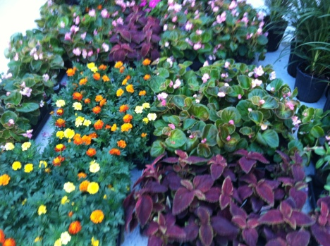 Lantana and Pentas are among the butterfly plants not growing in the spinal cord injury unity courtyard.