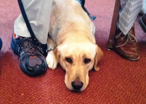 Zak, a 2-year-old yellow Labrador, is one of the newest Paws for Patriots graduates. (June 2015)