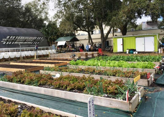 "Onions, red and green lettuce, tomatoes and strawberries are part of the crops in the sustainability ""demonstration"" garden."
