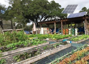 Solar panels are the sole power for the sustainable garden project that was expanded to include veterans. It's a place where veterans can learn gardening techniques as well as solar power, raising chickens, bees and tilapia.