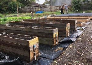 Four of the 10 garden beds for veterans are raised giving easier access to veterans in wheelchairs.